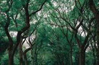 классы драгоценных камней