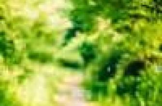 Аромат, мужской эффект, запах