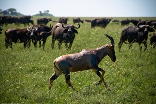Tanzania-Serengeti_National_Park-001-DSC_5547