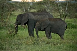 Tanzania-Serengeti_National_Park-027-DSC_5270