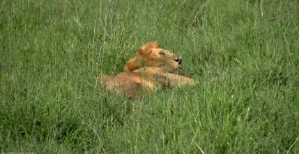 Tanzania-Serengeti_National_Park-037-DSC_5403