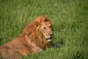 Tanzania-Serengeti_National_Park-055-DSC_5428