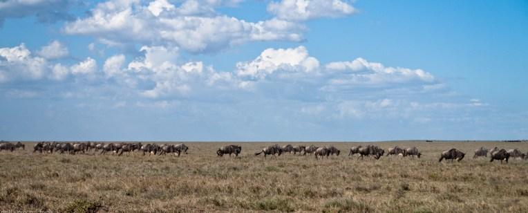 Tanzania-Serengeti_National_Park-063-DSC_5232