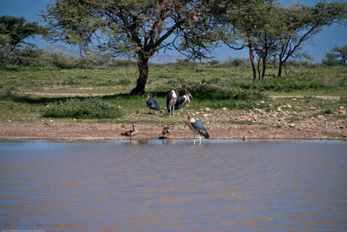 Tanzania-Serengeti_National_Park-093-DSC_5186