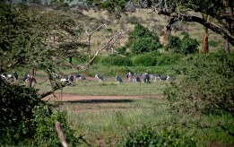 Tanzania-Serengeti_National_Park-094-DSC_5866