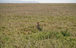 Tanzania-Serengeti_National_Park-095-DSC_5940