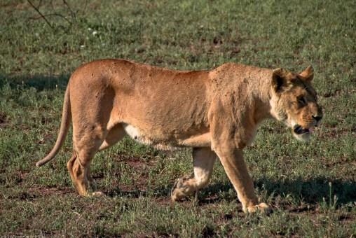 Tanzania-Serengeti_National_Park-129-DSC_5314