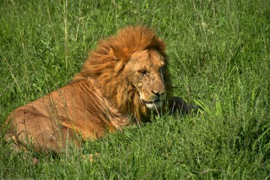 Tanzania-Serengeti_National_Park-133-DSC_5425