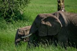 Tanzania-Serengeti_National_Park-136-DSC_5377
