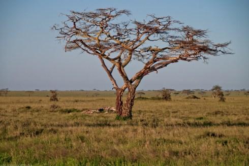 Tanzania-Serengeti_National_Park-140-DSC_5667