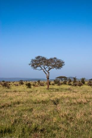 Tanzania-Serengeti_National_Park-149-DSC_5324