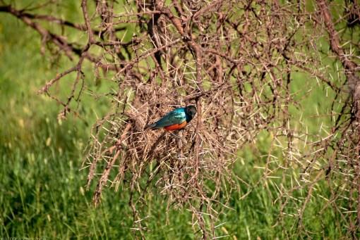 Tanzania-Serengeti_National_Park-153-DSC_5331