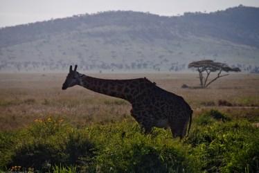Tanzania-Serengeti_National_Park-161-DSC_5645