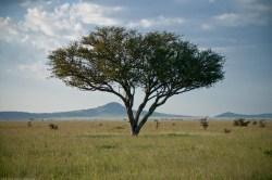 Tanzania-Serengeti_National_Park-164-DSC_5662