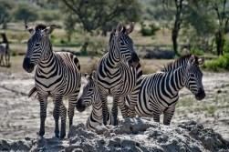 Tanzania-Tarangire_National_Park-004-DSC_6130