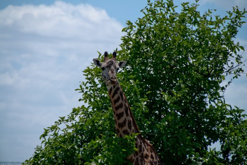 Tanzania-Tarangire_National_Park-006-DSC_6187