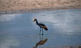 Tanzania-Tarangire_National_Park-013-DSC_6253