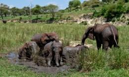 Tanzania-Tarangire_National_Park-023-DSC_6240