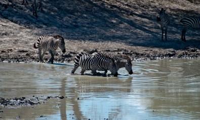 Tanzania-Tarangire_National_Park-032-DSC_6124