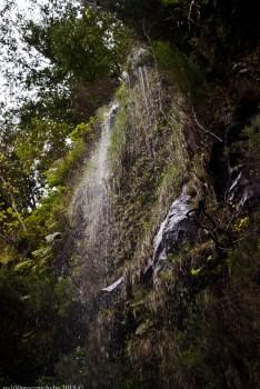 2016-02-08-13-Madeira-DSC_2103
