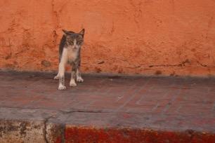 Kat in Marrakech