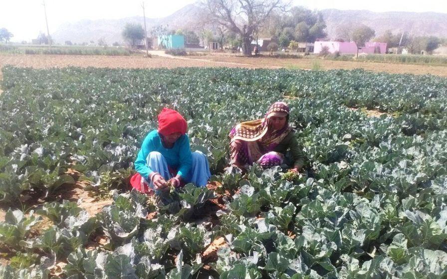 Jagrak Krishak: Empowering Women Farmers In Rajasthan 1