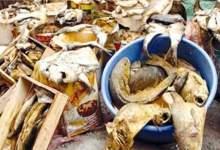 Photo of الصحة: ضبط 53 طن أغذية متنوعة وأسماك مملحة ومدخنة بمحافظات الجمهورية