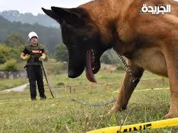 Photo of الكلاب المدرّبة فى البوسنة تكشف الألغام وتنقذ الأرواح في عدة دول