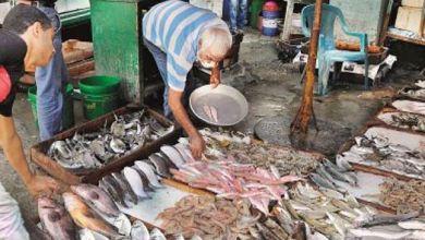 Photo of أسعار الأسماك والجمبرى اليوم .. تعرف عليها