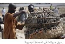 Photo of سوق حيوانات في نيجيريا يثير الرعب من فيروس إفريقي جديد (صور)