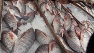 Photo of السمك يشهد إرتفاعا في الأسعار اليوم …تعرف على التفاصيل