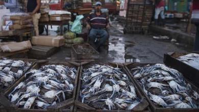 Photo of إرتفاع أسعار السمك البلطي والمكرونة في الأسواق اليوم