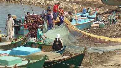 Photo of وزير الزراعة يعلن افتتاح موسم الصيد في بحيرة البردويل