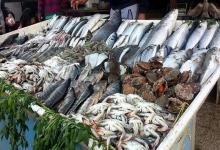 انخفاض كبير فى أسعار السمك باسواق الخرطوم