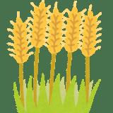 ダイエットにおすすめ|スーパー大麦のすごい効果+実際に食べた感想