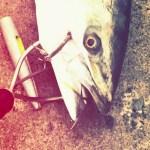 【旨い魚を持ち帰る】ショア編