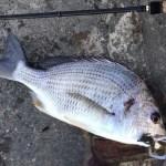 浜名湖ナウ!byお客さん フリーリグ釣れてますよ!