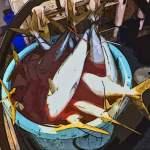 伊勢湾の三重方面で青物祭り!ボッコボコです!