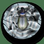 bug03