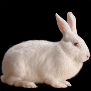 white.Rabbit (day 04), NFT / Print series, naccarato, 2021