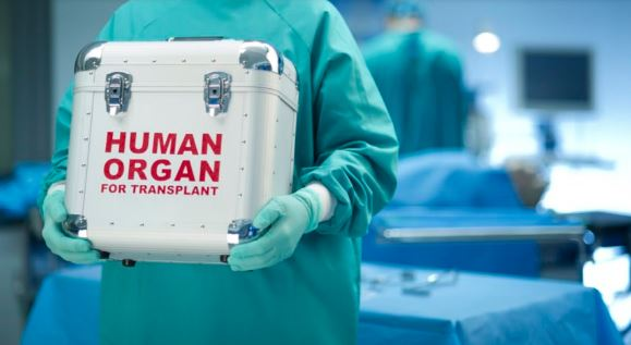 health professional in green gown, green rubber gloves holding white box with red text ' HUMAN ORGAN FOR TRANSPLANT' against surgical theatre background