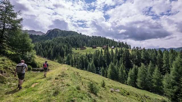 natur, berg, baum