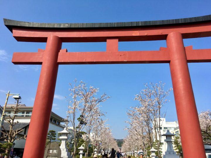 鎌倉 鶴岡八幡宮 さくら 桜 段葛 宇宙船 スピリチュアル 赤い鳥居 桜並木