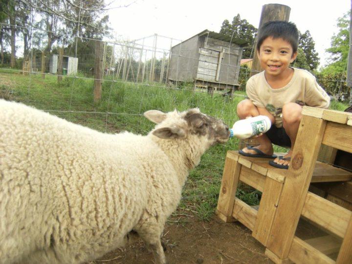 羊 ニュージーランド なちゅらる宇宙人
