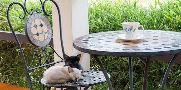 ペット同伴のお客様への飲食店側の対応のポイント