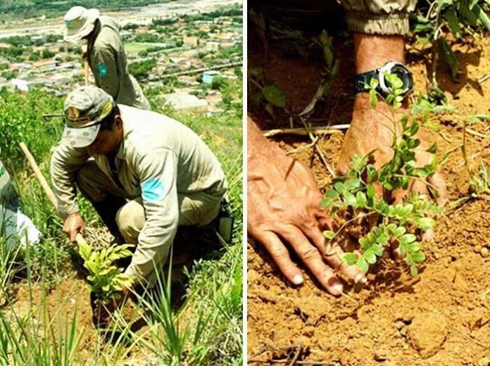 СВАKА ЧАСТ! Спектакуларне фотографије пре и после: Бразилски брачни пар од пустаре направио рај посадивши 2 милиона стабала (ФОТО) (ВИДЕО) 4