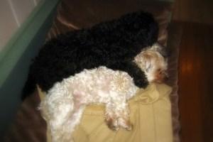 Två sovande vänner bbb