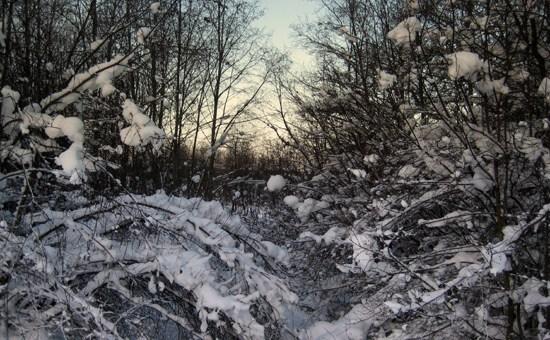 Nacka skogen 550