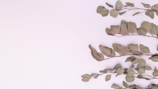 Como salvar uma planta seca?