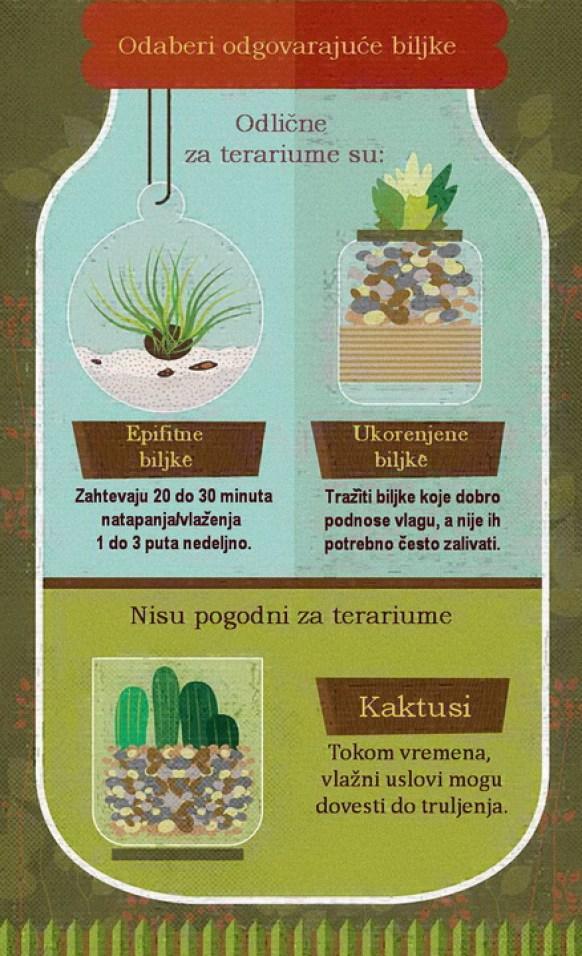 gajenje biljaka u terarijumu 1